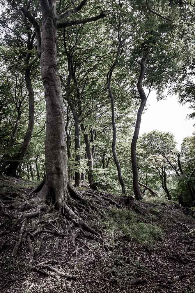 Skønneste gammle skov