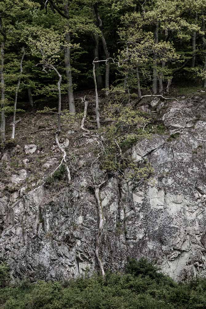 Skoven falder i Ekkodalen pŒ åBornholm.