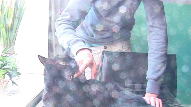 Banditten hedder katten