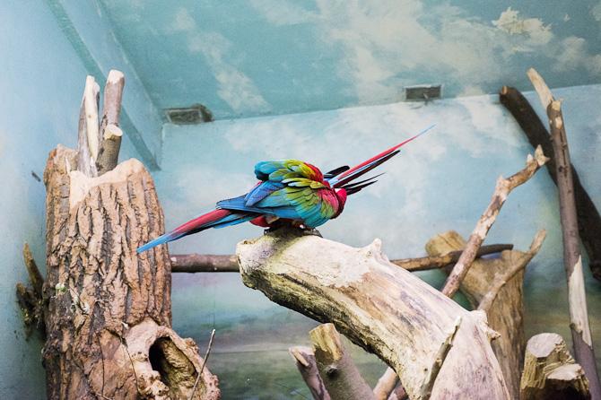 Parrot(s)