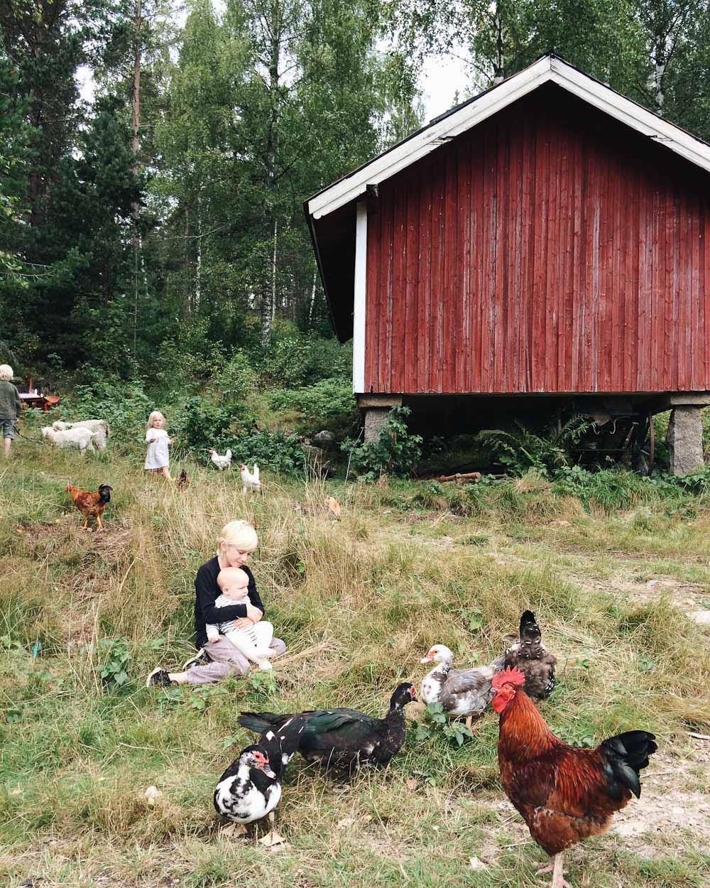 De fleste af vores dyr går frit på gården. Der er jo langt til naboerne så de generer ingen.