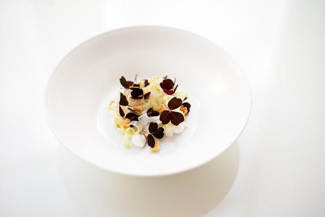 Saltet kammusling med saltet yoghurt, croutons, syltet blomkål & simonekål og skovsyre Foto: Rasmus Flindt Pedersen