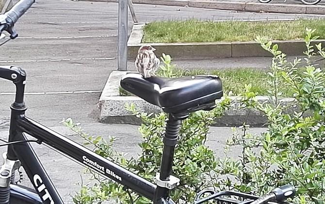 Huha for en cykeltur