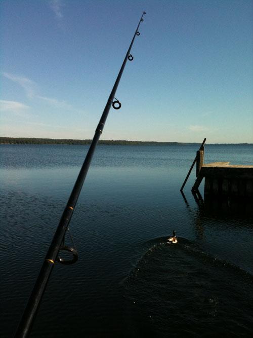 Der blev fisket - i to omgange faktisk. Og her er snørren ikke ført på plads...