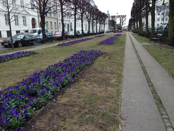 Der blev sat blomster fri