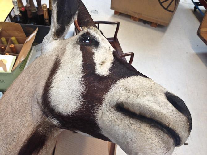Mule-skud