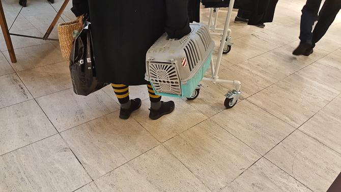 Bi-strømper? Tjek. Katten med på indkøb? Tjek.
