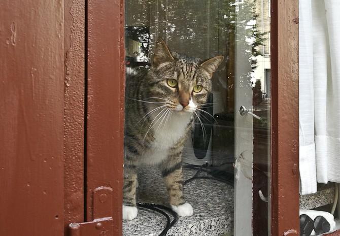 En mis i vinduet