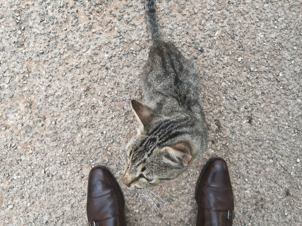 Munk cat