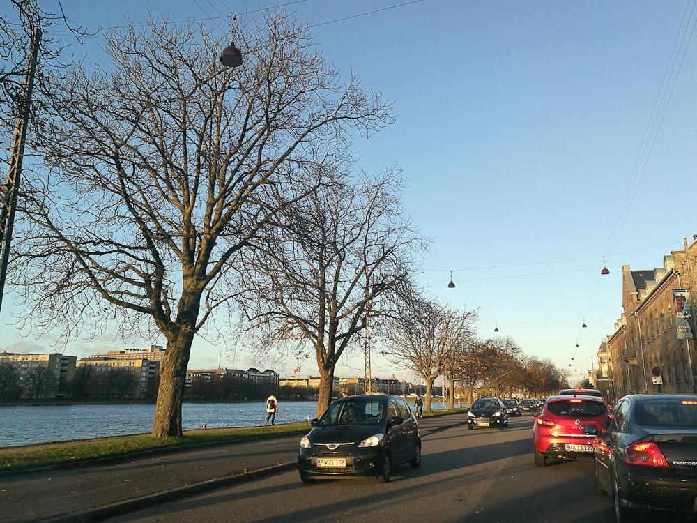 Lav sol, afpillede træer og begyndende vinter