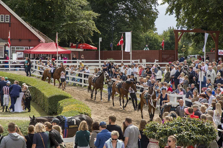 The Macallan Derby